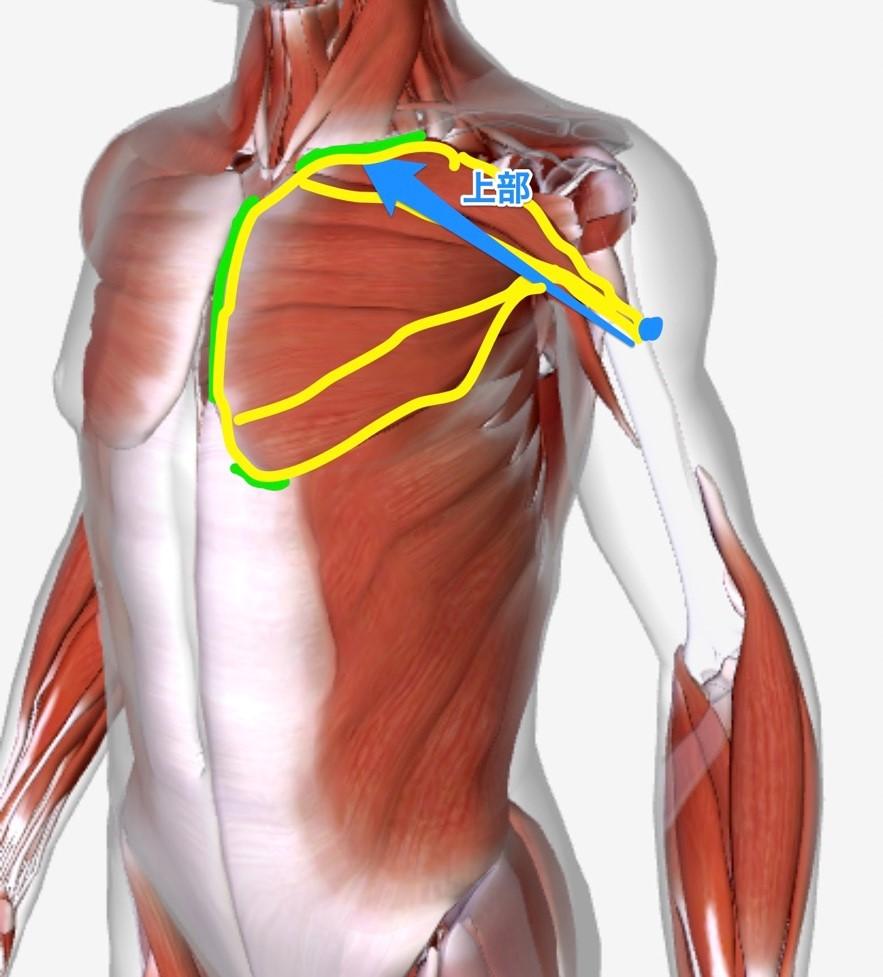 と 押す 右 痛い 肋骨 下